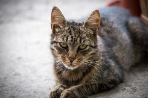 cat-173130_640 (1)