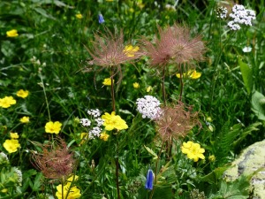 flower-meadow-181684_640